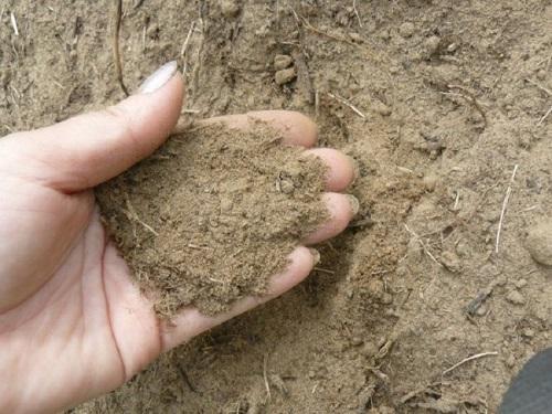 วิธีการทำดินทรายที่เหมาะสมสำหรับการปลูกพืชสวนและสวน?
