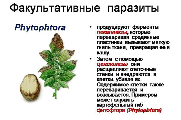 ciuperci parazitare obligatorii)
