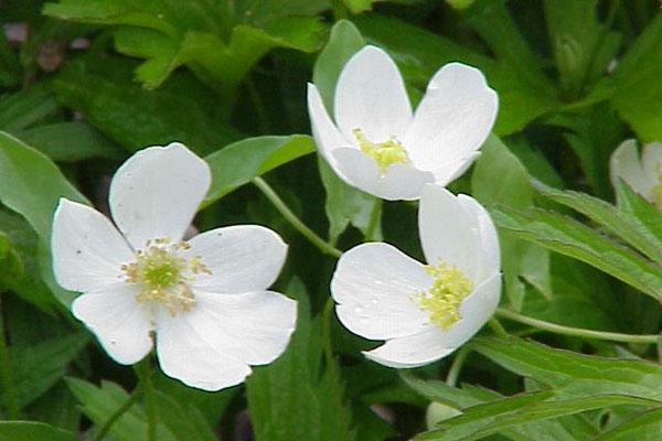 Нежная красавица в белом
